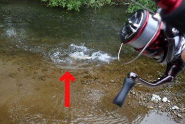 ブラウン釣り!今年初の渓流へ!とんでもない大物、掛かる。