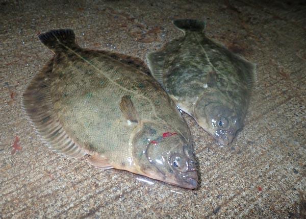 函館・初のアナゴ(ハモ)釣り調査!ハプニングあり、カレイもありな2日間に。