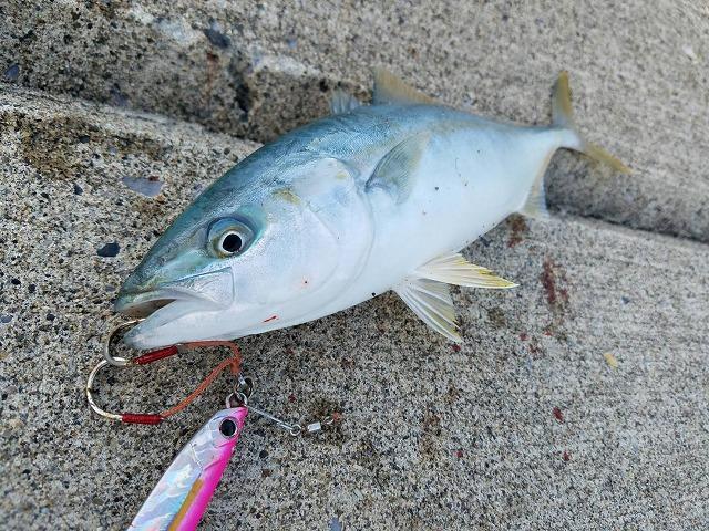 奥尻島で自転車釣りキャンプ旅!釣った魚だけで過ごす離島釣行!その①