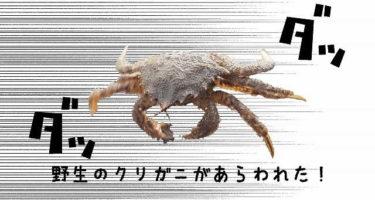 函館港内クリガニ釣りへ!アクロバティックリガニからの毛ガニサイズ現る。