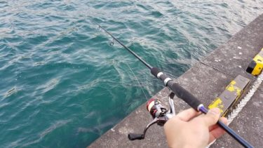 函館港内エギング連続釣行も・・・ヤリイカ消えた?