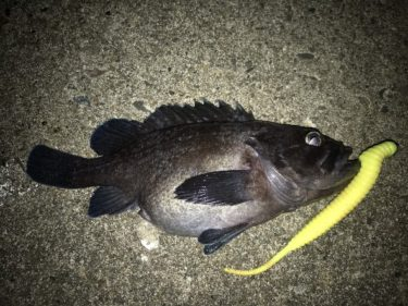 【北海道釣り情報18日更新】島牧モンスタークラスのアメマス上がる。5月の釣果投稿!第2弾