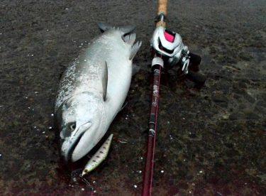 【2019】釧路でサクラマス釣行!連日好調で友人も良型GET!