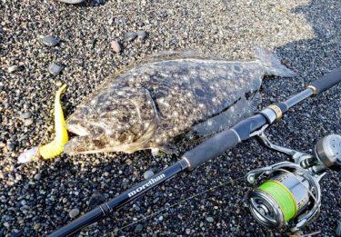 日本海ヒラメ釣り2連戦へ。大逆転の1枚でヒラメ尽くしを味わう!
