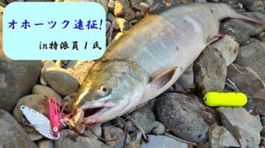 オホーツク鮭釣り遠征!魚影は濃いもバラしまくり釣行。