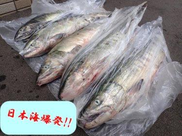 日本海鮭釣り(アキアジ)遠征!1時間半で5本GETの久々爆釣!!