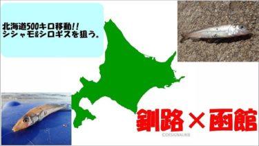北海道の釣りならでは!?一日で500キロ移動してシシャモ&シロギスを釣ってみた。