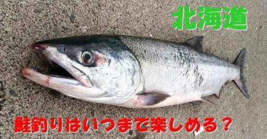 鮭(アキアジ)はいつまで釣れる?全道各地のシーズンについて解説!