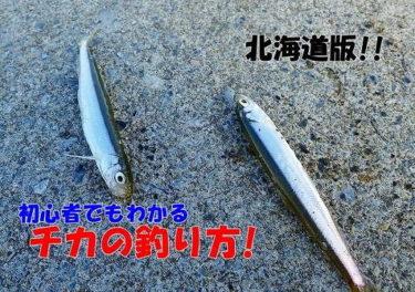 チカの釣り方!サビキ釣りで大漁にゲットするコツとは