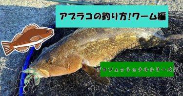アブラコ(アイナメ)の北海道での釣り方とコツ!ワーム編!