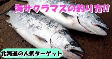 海サクラマスの釣り方!タックル選びやルアーのオススメについて