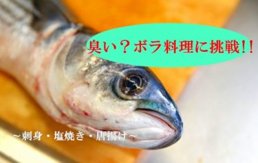 北海道の極寒の海で釣れた寒ボラを料理してみた!!