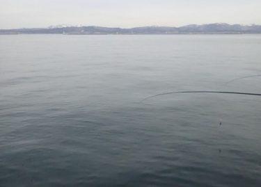 函館港内サクラマス調査。ぐぐっとバイトあるも…?