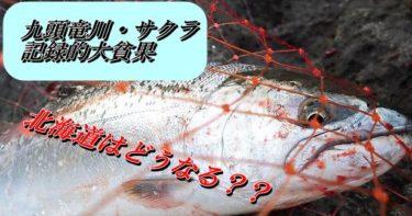 【2020】九頭竜川サクラマス釣りに異変!!北海道の釣果はどうなる?