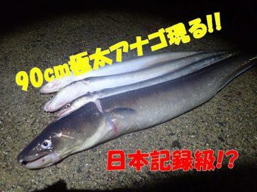日本記録級再び!雨上がり後のアナゴラッシュ突入!!