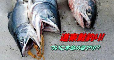 道東鮭(アキアジ)釣り。移動の末、本命現る!?