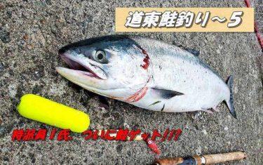 道東鮭釣り!いよいよ今期初のアキアジゲットで大興奮!!