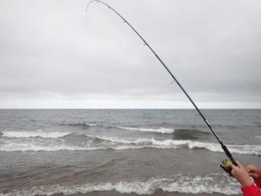 道東鮭釣り遠征④釣ったその場でイクラ丼。シイラまで現る!?