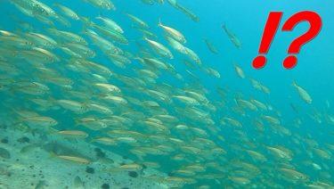 泳がせ釣りへ!GoProでまさかの映像!!ふぃっしんぐっどメンバー大集合会。