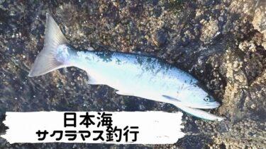 日本海サクラマス釣行!いよいよ本格化間近?