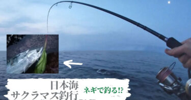 日本海サクラマス釣行!行者ニンニクをお供にすれば魚は釣れる。