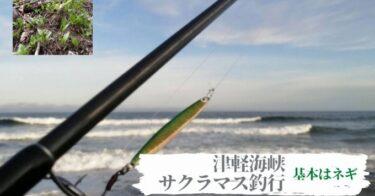 津軽海峡サクラマス釣行!数日前に釣れてる釣り場は大抵釣れない件。