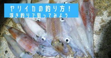 ヤリイカの釣り方!堤防・漁港から浮き釣り(テーラー仕掛け)で狙ってみよう!
