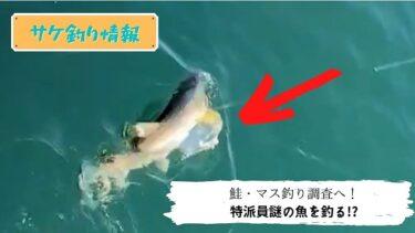 鮭・カラフトマス調査へ!不発に終わるかと思いきや…。ミノーで謎の魚ヒット!?