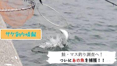 道東鮭・カラフトマス釣り!今期初物捕獲成功!!【特派員I氏】