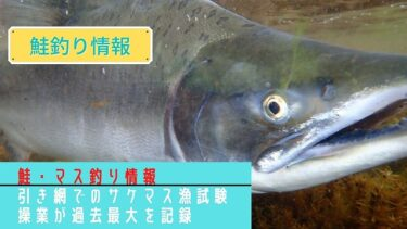 【2021鮭釣り情報】カラフトマス豊漁に!?引き網でのサケマス漁試験操業が過去最大を記録!
