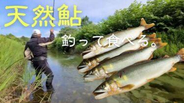 道南で鮎釣りに挑戦!渓流の女王を塩焼きでいただく。
