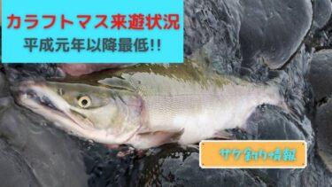 【2021】カラフトマス来遊状況まとめ!平成で一番の不漁年に。
