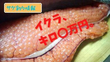 【鮭釣り情報】イクラの値段がヤバい件について。キロ〇万円目前!?