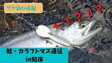【2021鮭釣り遠征】知床で卑猥なルアーでカラフトマス釣れてしまう。