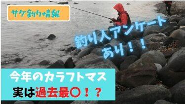 今期のカラフトマスは記録的〇調…!?釣り師のアンケートも交えて考察する。