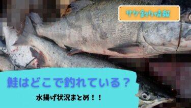 【鮭釣り】鮭定置網漁の水揚げをチェック!どの地域が好調!?