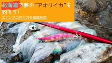 北海道のアオリイカの釣り方!ロッドからエギの選び方まで徹底解説!!